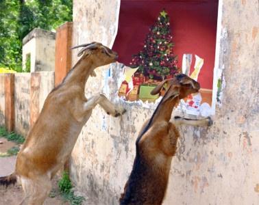 Weihnachten: Staunen wie die Zie- äh, ne: Kinder.... Bild erstellt mit Hilfe von https://photofunia.com/