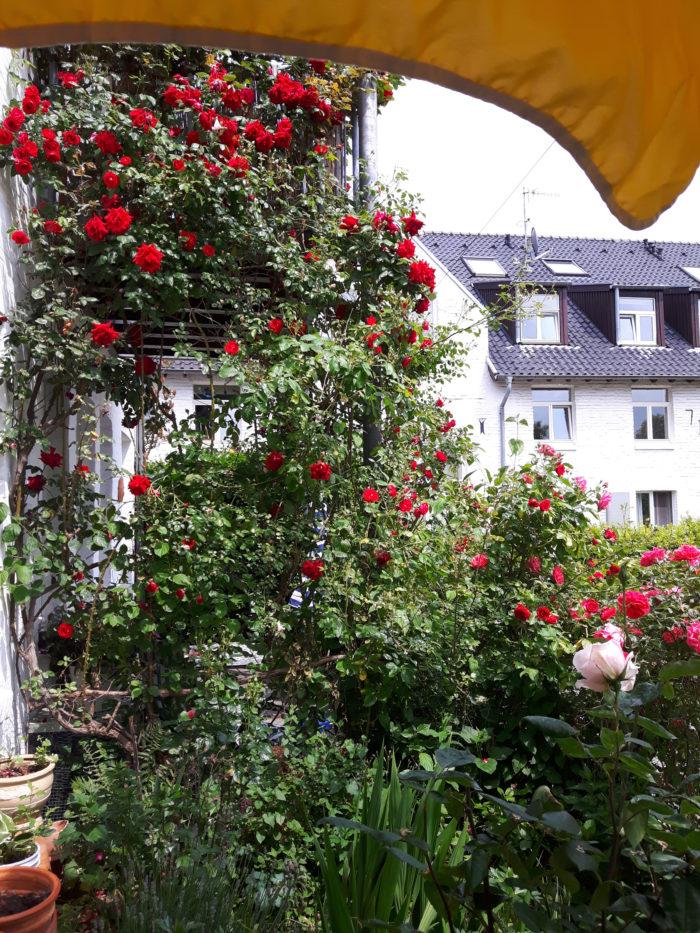 Vom Wert der Natur in der Selbstständigkeit, #NaturSichtBlogaktion, Natur und Selbstständigkeit, Terrasse, Home-Office